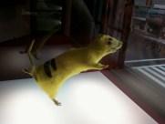 tanzende Ratte, nach dem Mord in Pikachu verzaubert von ChimPon