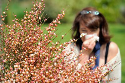 Allergy forecast: What to expect from a heightened allergy season
