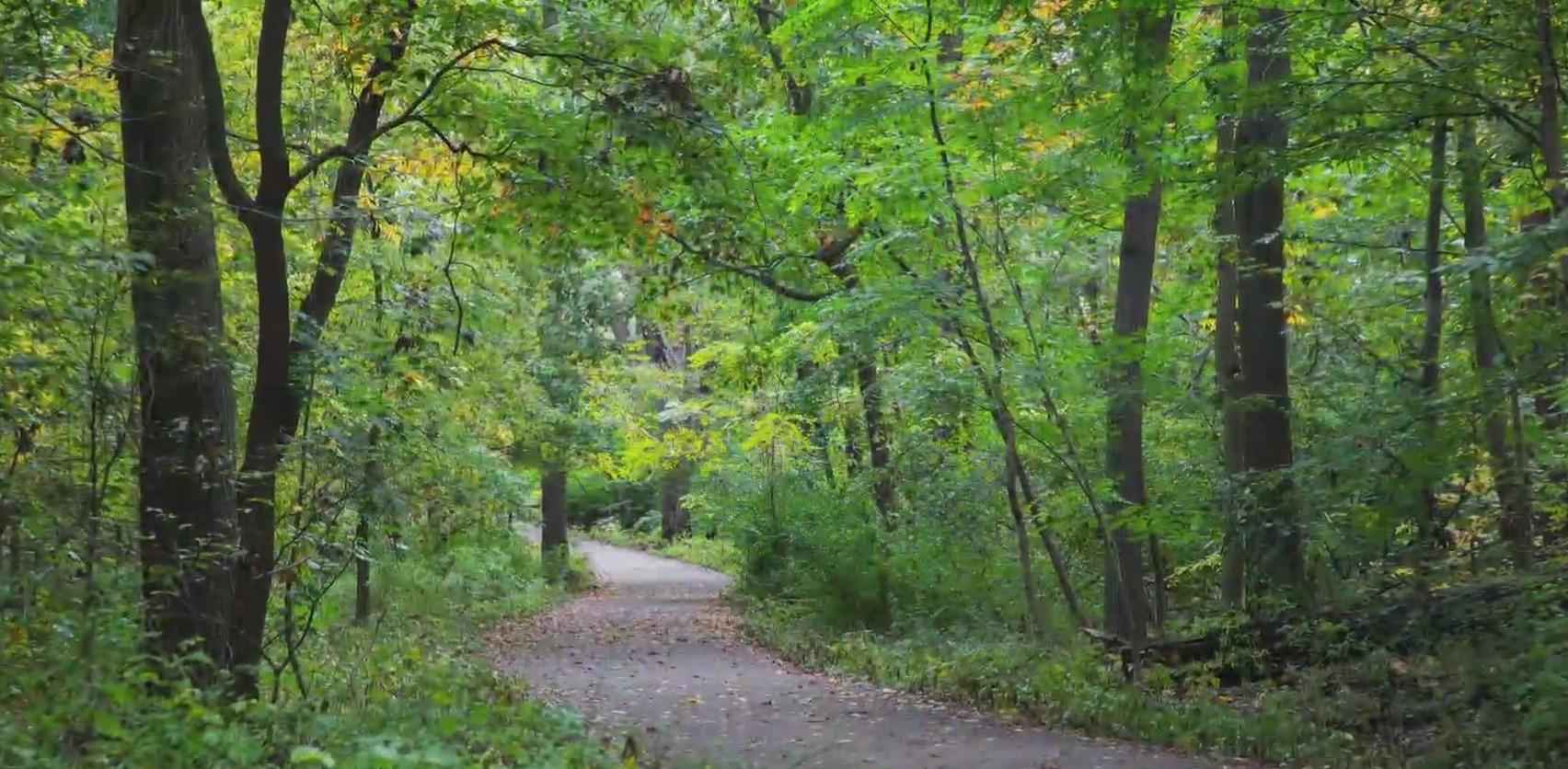 NYC hiking trail
