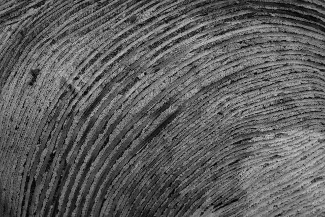 Black and white texture on stone