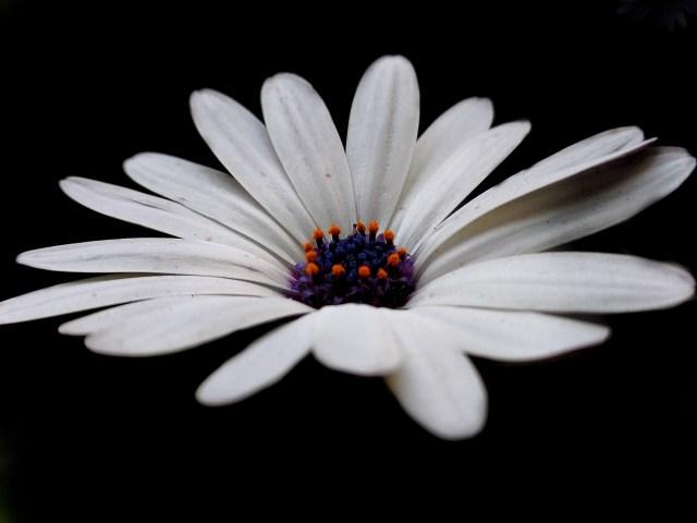 Bloom through the darkness