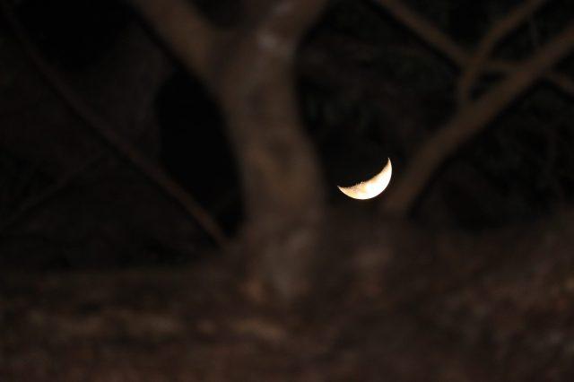 Crescent Moon in the dark night
