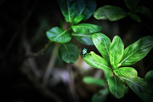 Lady bug on a leaf
