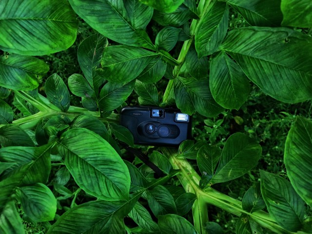 Old camera on a plant