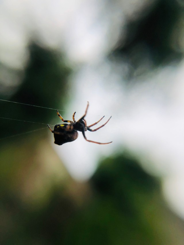 Spider holding on to a web