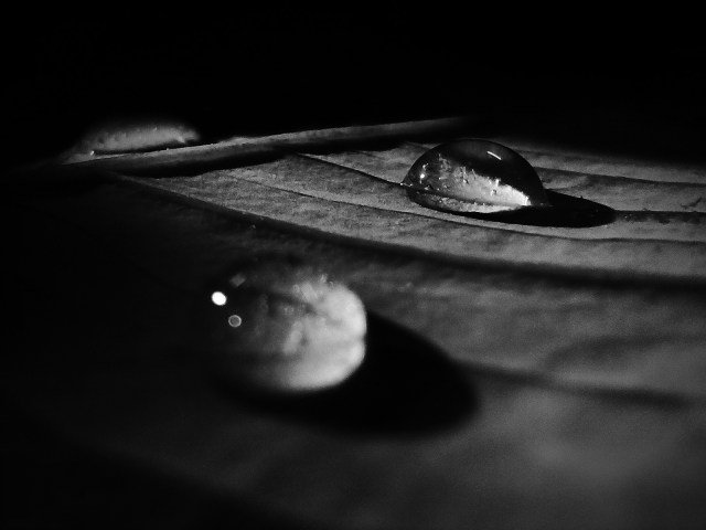 Water droplets in black and white