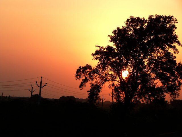 sun setting behind a tree