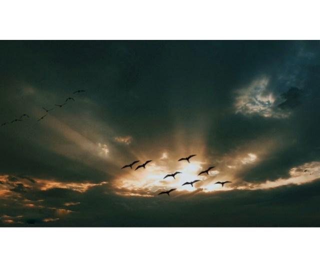 Birds flying in the beautiful sky