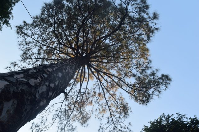 Tree bottom to top view