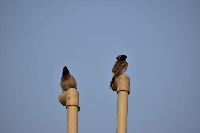 Sitting birds