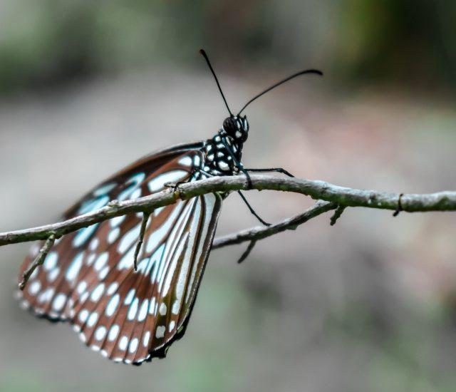 Butterfly on stem