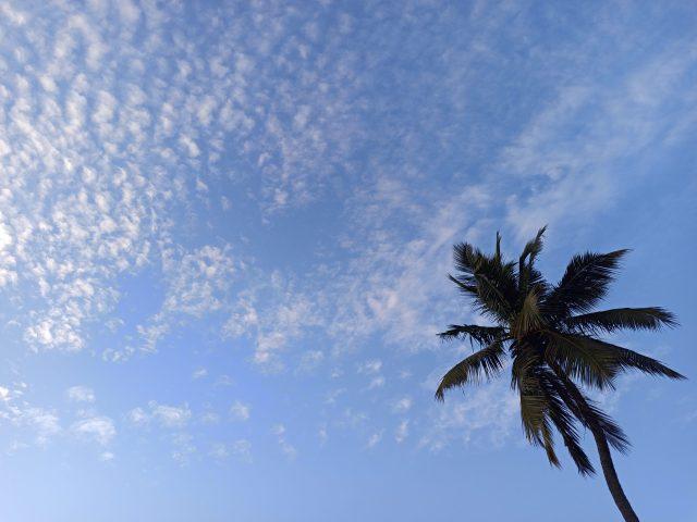Coconut Tree and A Blue Sky