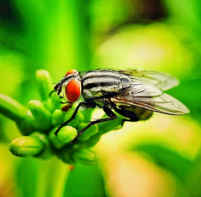 Fly on Focus