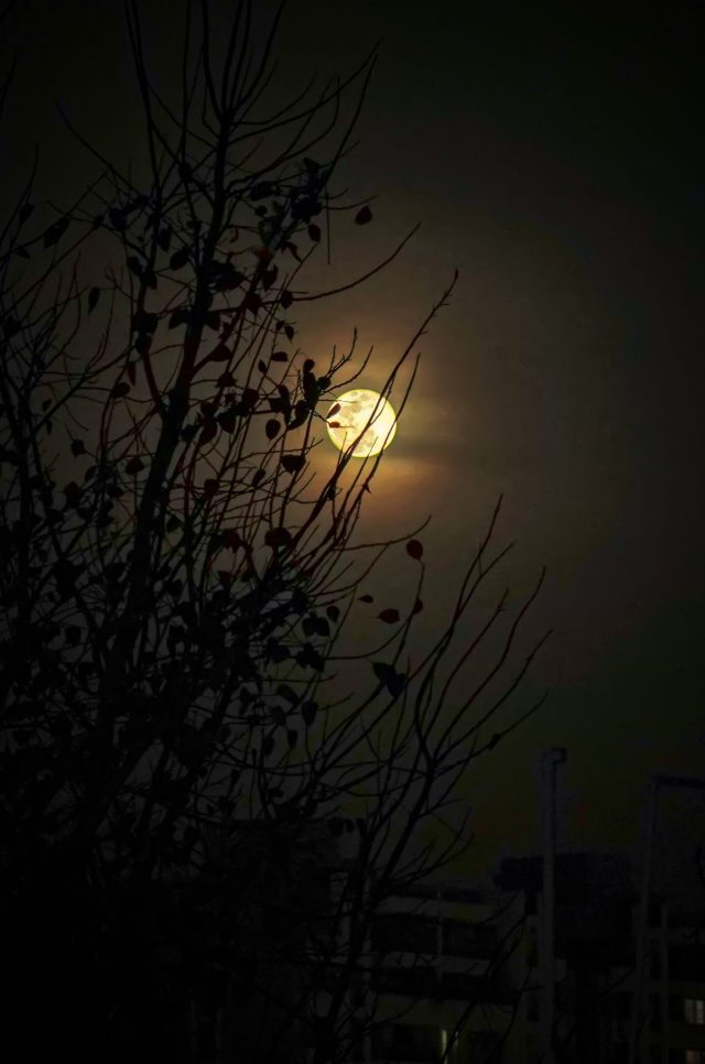 Full Moon on the Trees