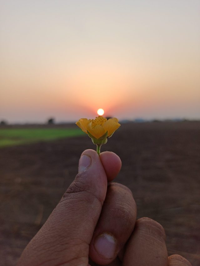 Hand holding tiny yellow flower with sun on top
