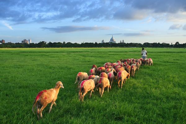 Flock on Green Carpet