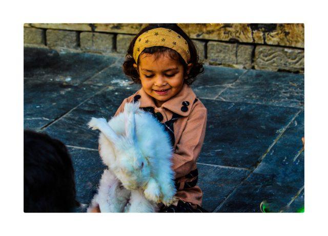 Shimla- Rabbit on a kid's lap