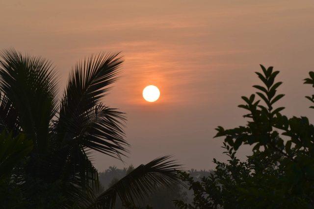Sunset through a jungle