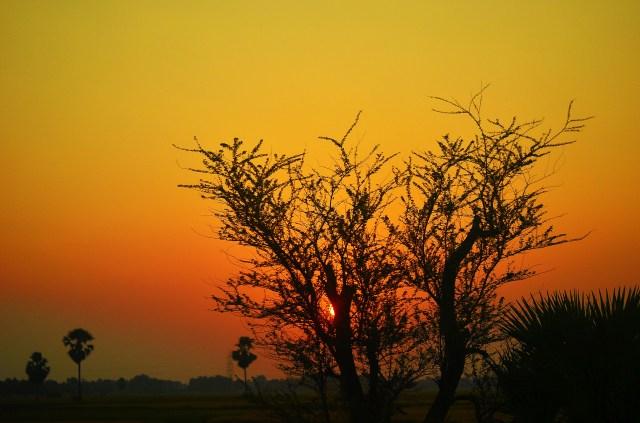 sun setting behind the tree