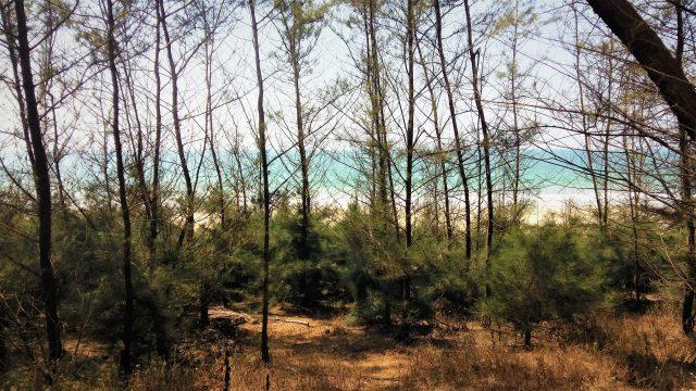 Trees near a beach