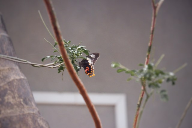 A butterfly on a plant