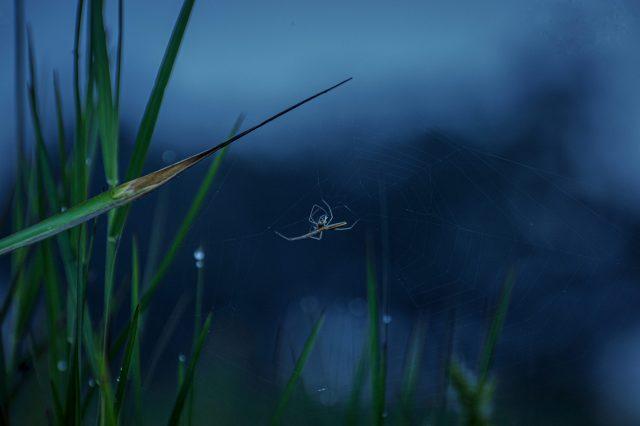 Grass & Spider