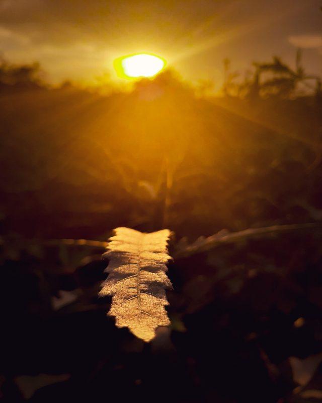 Sun light falling on a leaf