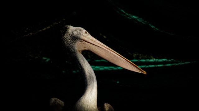 A bird with long beak