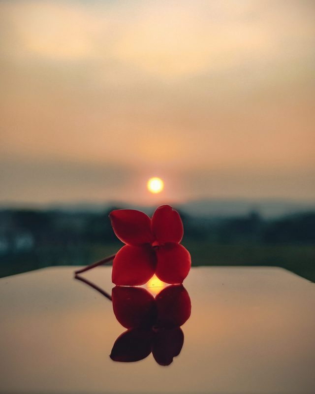A flower with reflection and sunset