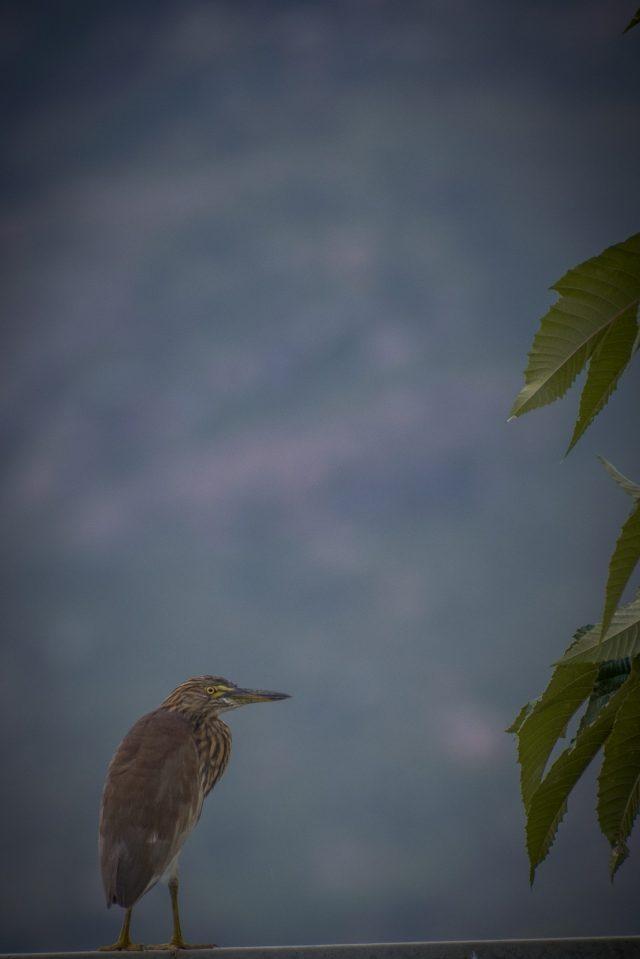 a sitting bird