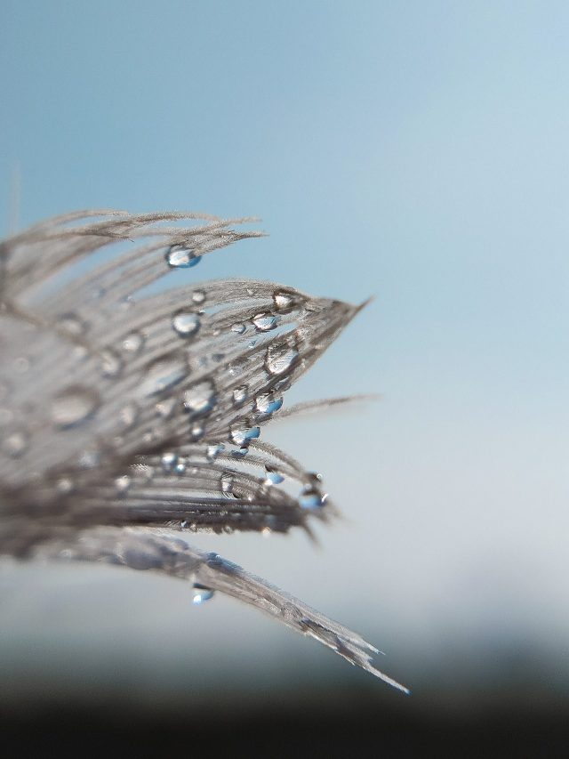 Droplets on a feather