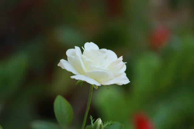 Glowing White Flower