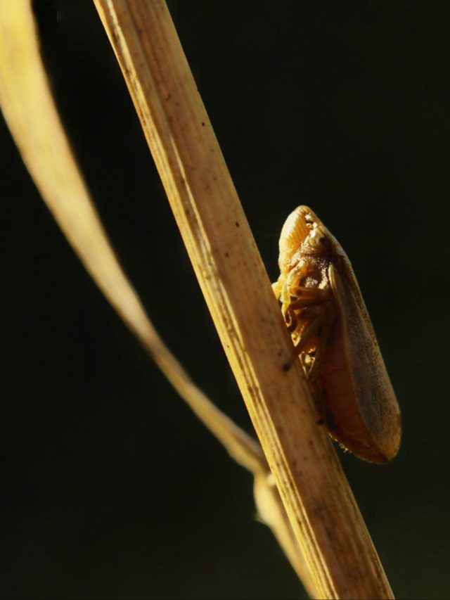 insect on a stem