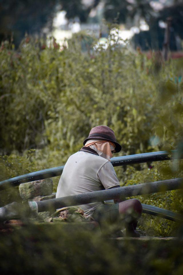 A man working in field