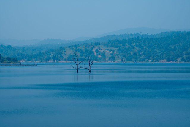trees among lake