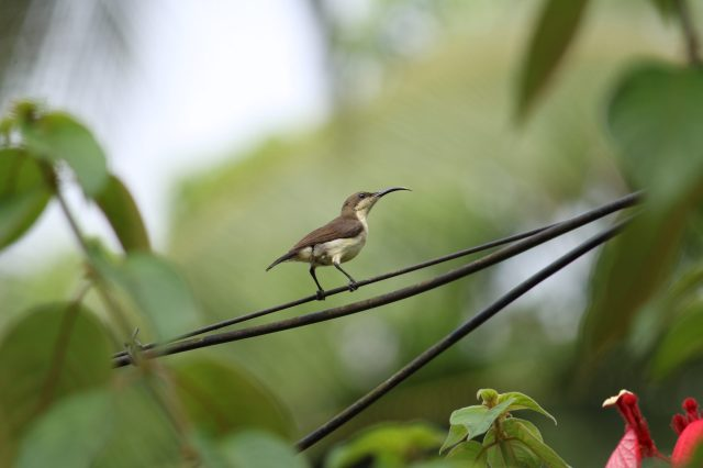 Bird sitting on cable
