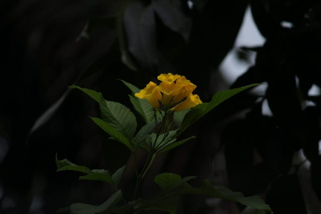 A flowering plant
