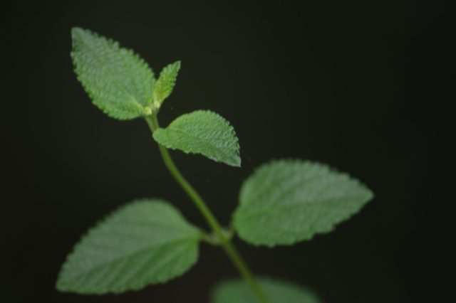Close-up of a plant leaves