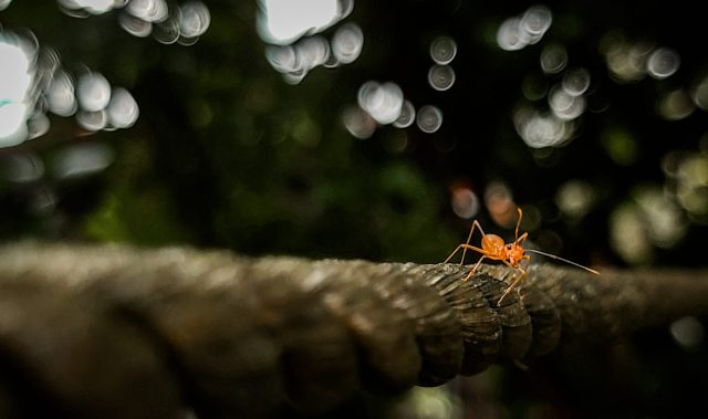 Ant on rope
