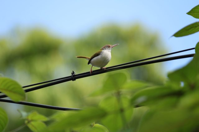 A bird on electric wire
