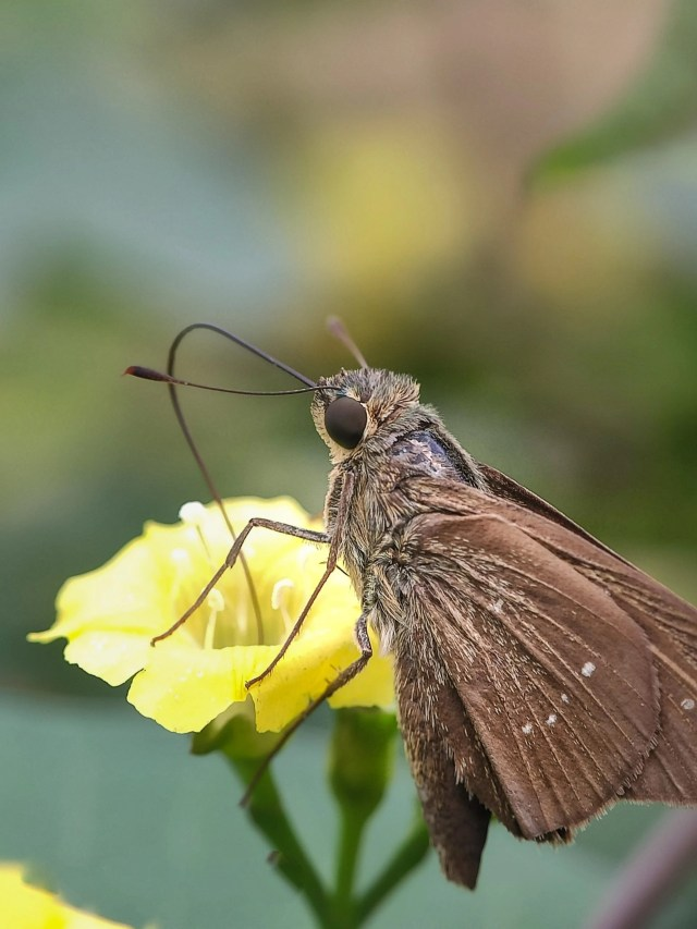 Nectar Close-up