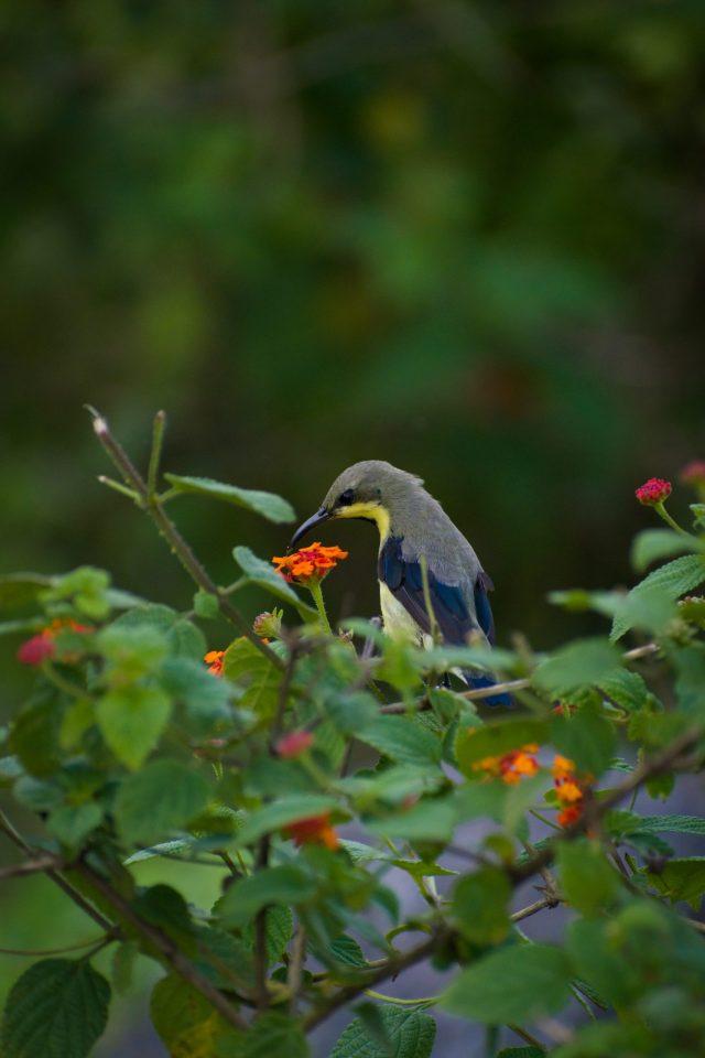 A sunbird on a plant