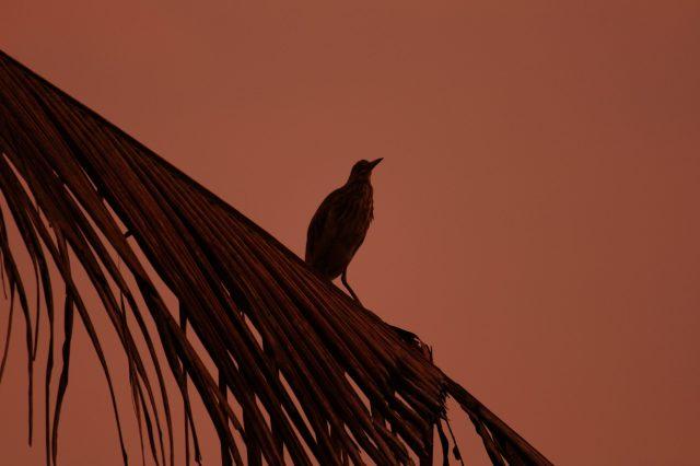 a bird on palm leaf