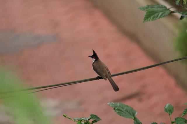 a bird sitting on wire