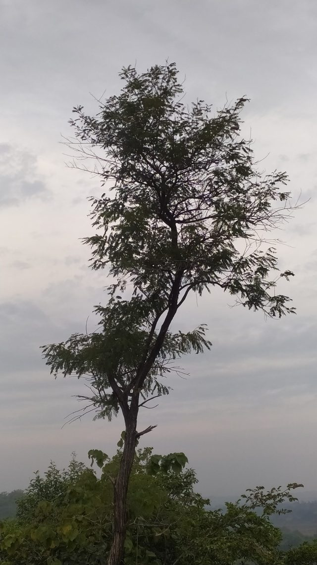 a standing tree