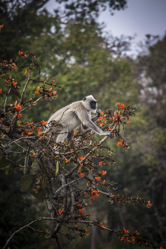 monkey on a tree