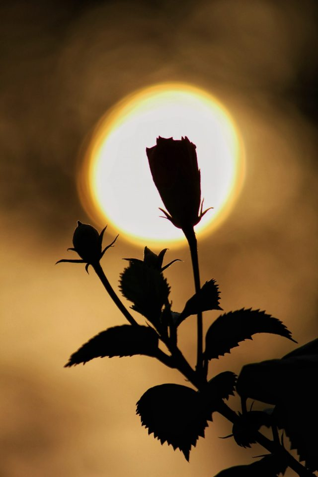 A flower plant during evening