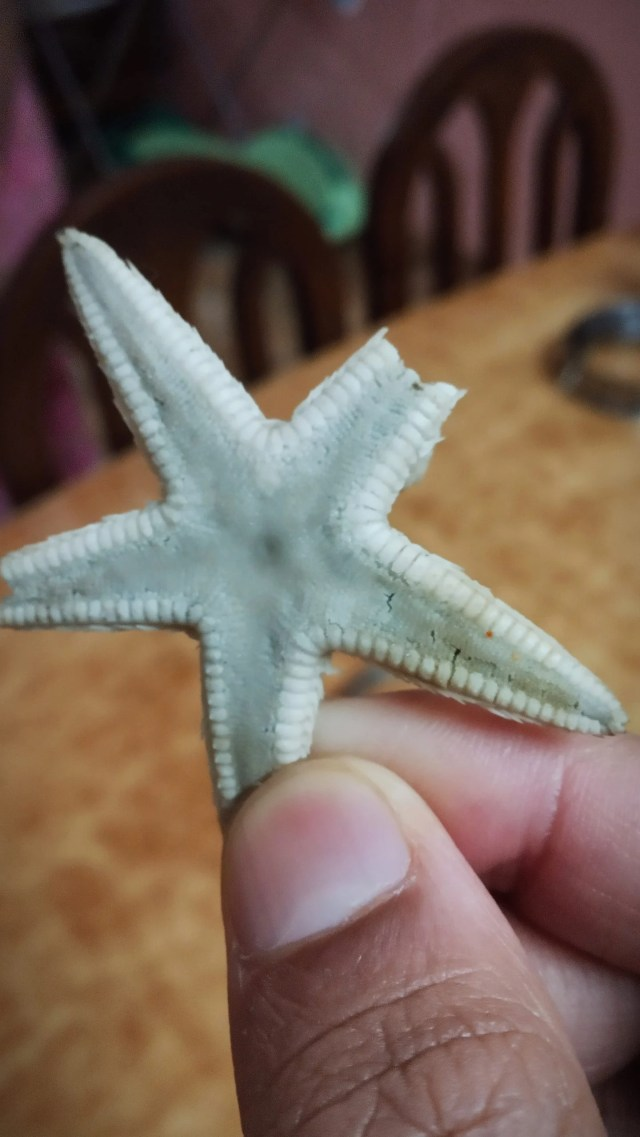 A starfish in hand