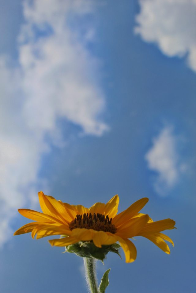 flower against sky
