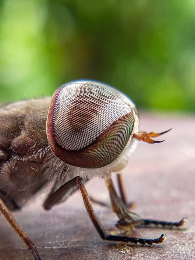Eye of an insect